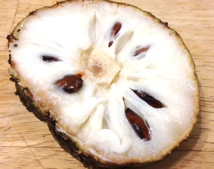 Soursop – A Powerful Treatment for Many Modern Day Health Challenges