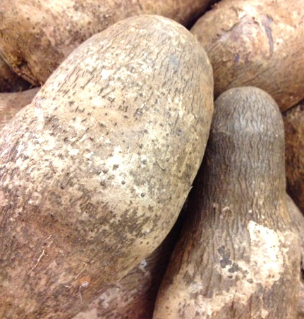 Chinese Wild Yam Or Cinnamon Vine Tuber A Powerful Life