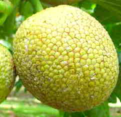Outside of Breadfruit