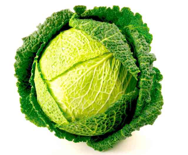Great Tasting Cabbage