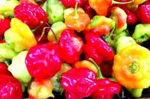 Organic Fruits and Veggies - 2