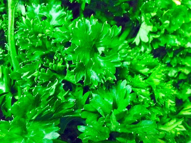 Parsley is Extremely Healthy