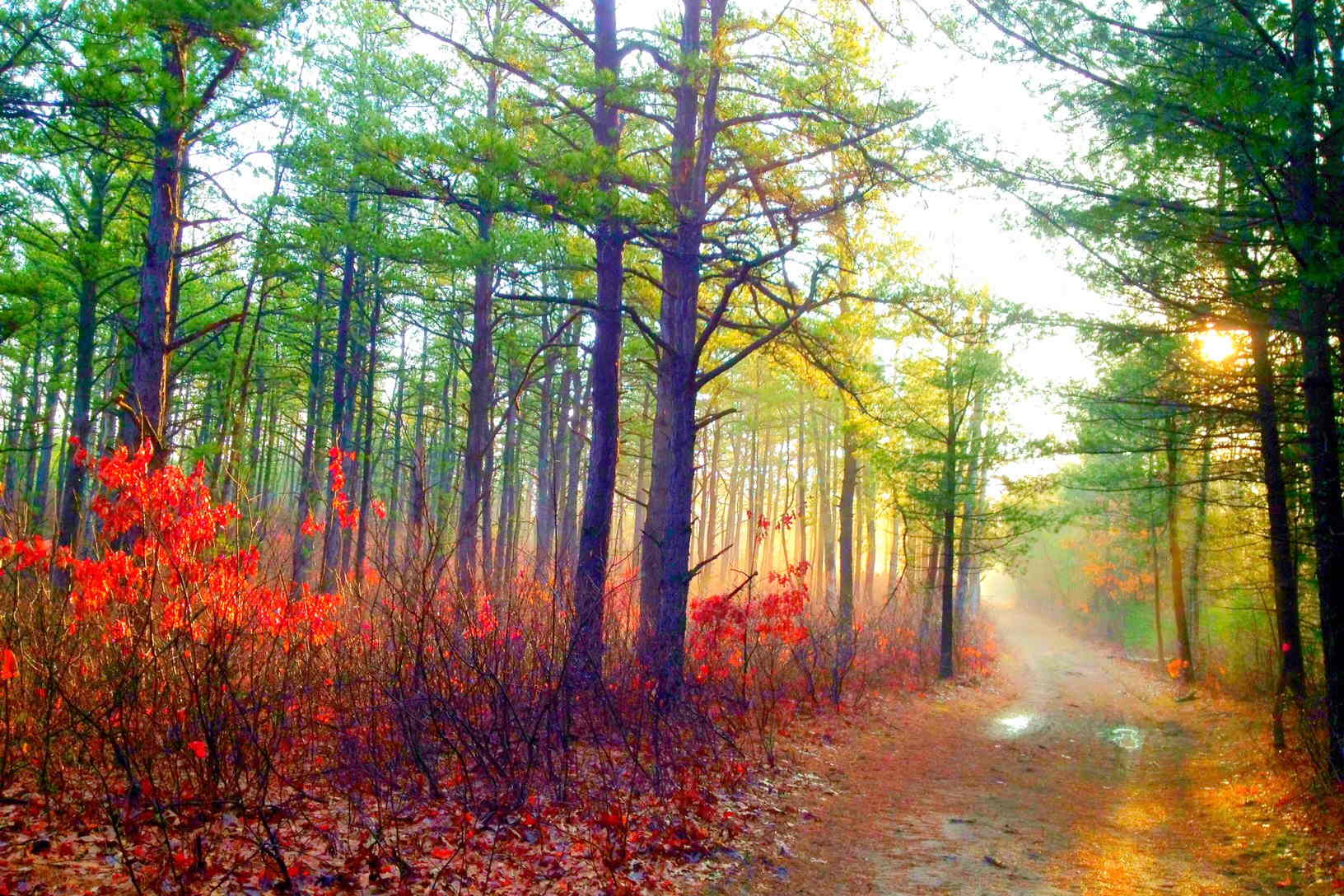 walking nature benefits miles walk amazing into