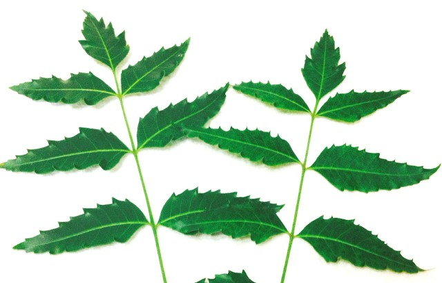 21 Virtues Of Neem Oil For The Skin Relax Into Success