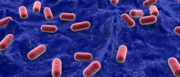Good Bacteria in the Colon