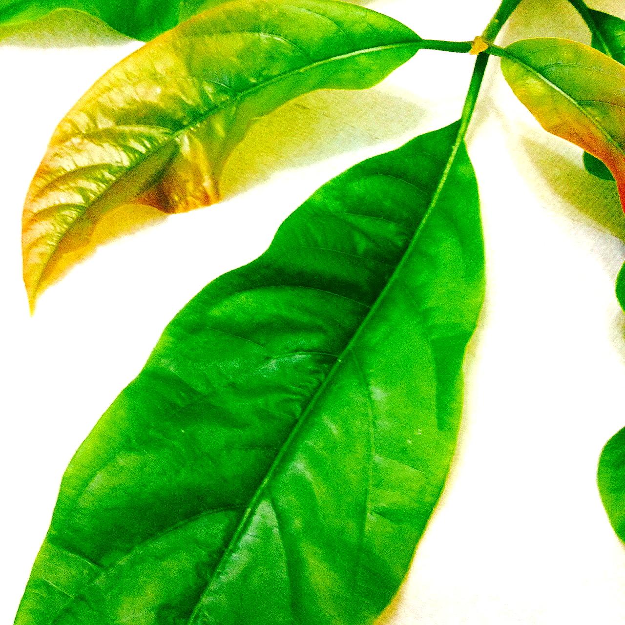 Avocado Health Benefits List