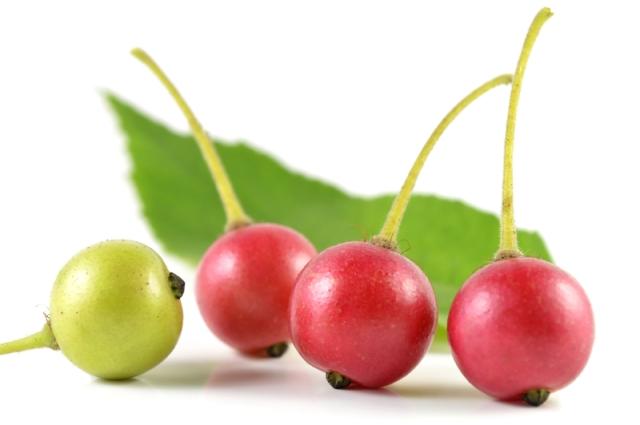 Kerson Fruit