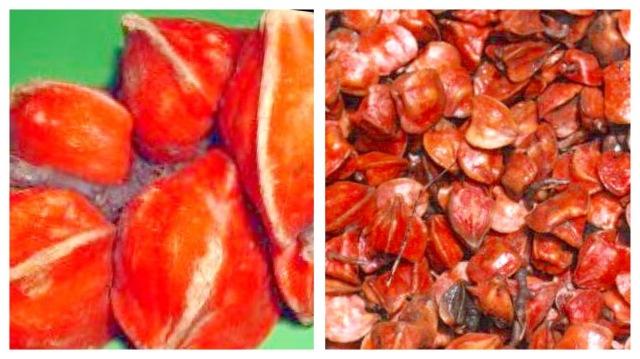 Fresh and Dried Katemfe Fruit