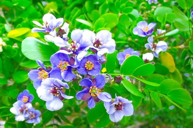 Tree of Life or Lignum vitae