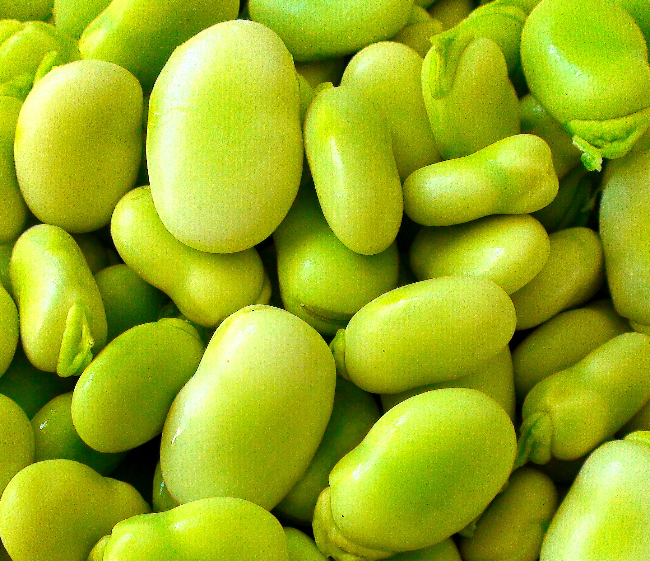 The 6 Powerful Benefits Of Fava Beans An Incredible Recipe