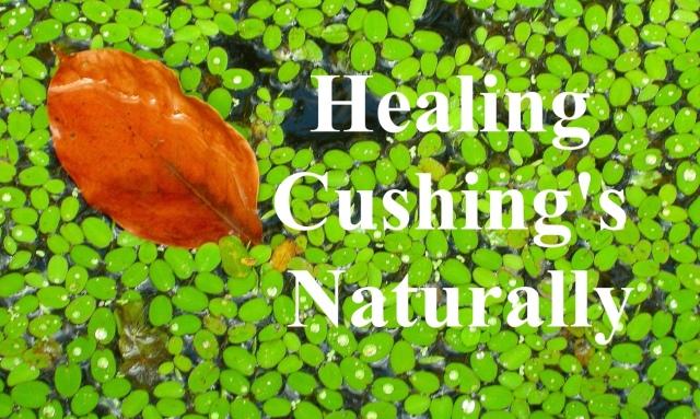 Healing Cushings