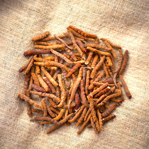 Dried Cordyceps Mushrooms