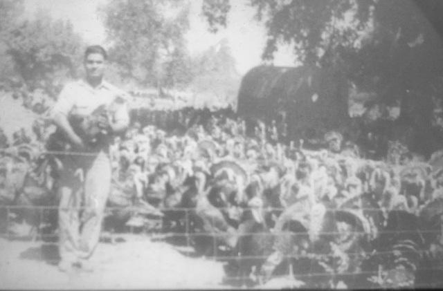 Young Man Raising Turkeys