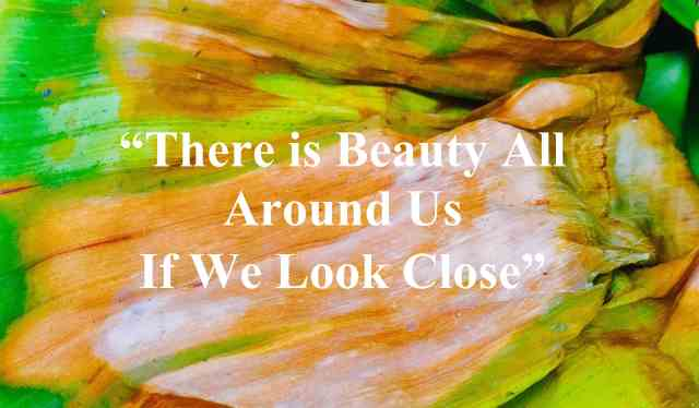 Beauty is Everywhere  copy