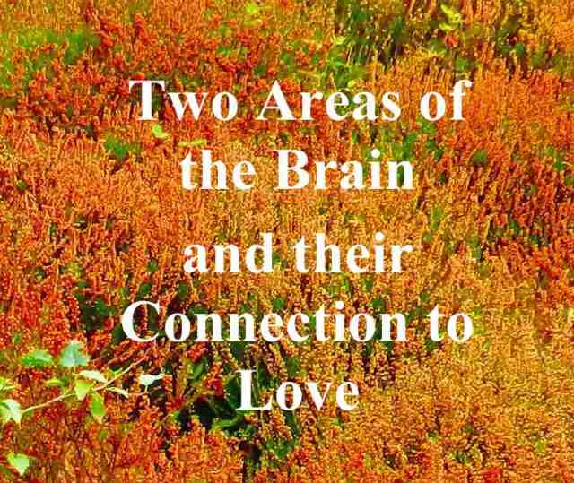 """Two Areas of the Brain and their Connection to Love"""
