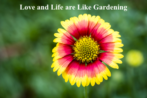 Love and Life are Like Gardening