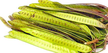 Guaje Seed Pods