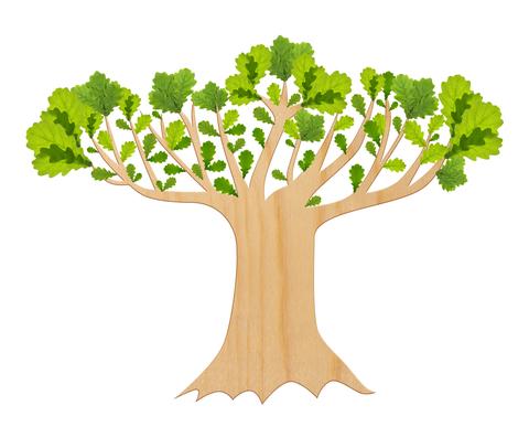 Oak Tree Drawing