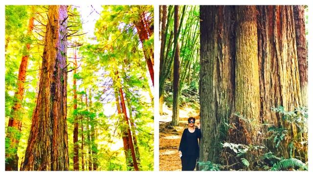 navarro-redwoods