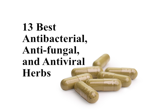 13 Best Antibacterial, Anti-fungal, and Antiviral Herbs